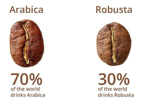 Robusta vs Arabica