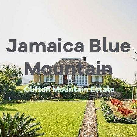 Volcanica Coffee Clifton Mount Estate Jamaican Blue Mountain Coffee