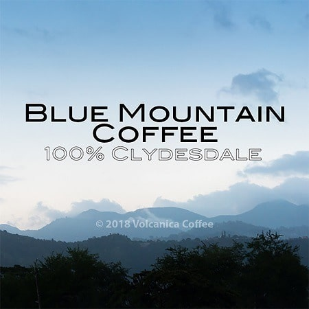 Volcanica Coffee Clydesdale Jamaican Blue Mountain Coffee
