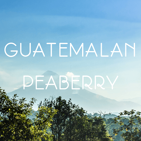 Volcanica Coffee Peaberry Guatemalan Coffee